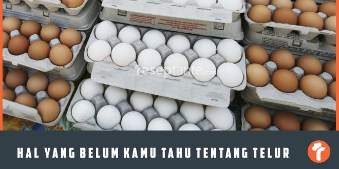 Beberapa Hal Yang Belum Kamu Tahu Tentang Telur
